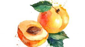 زردآلو احتمال بروز سرطان روده را کاهش میدهد