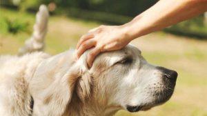 بیماریهای پوستی مشترک بین حیوانات خانگی و انسان